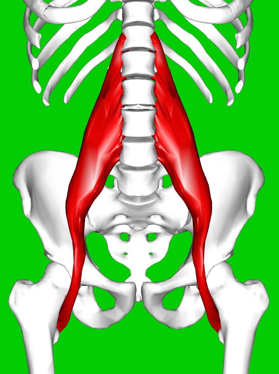 PsoasMuscle.png
