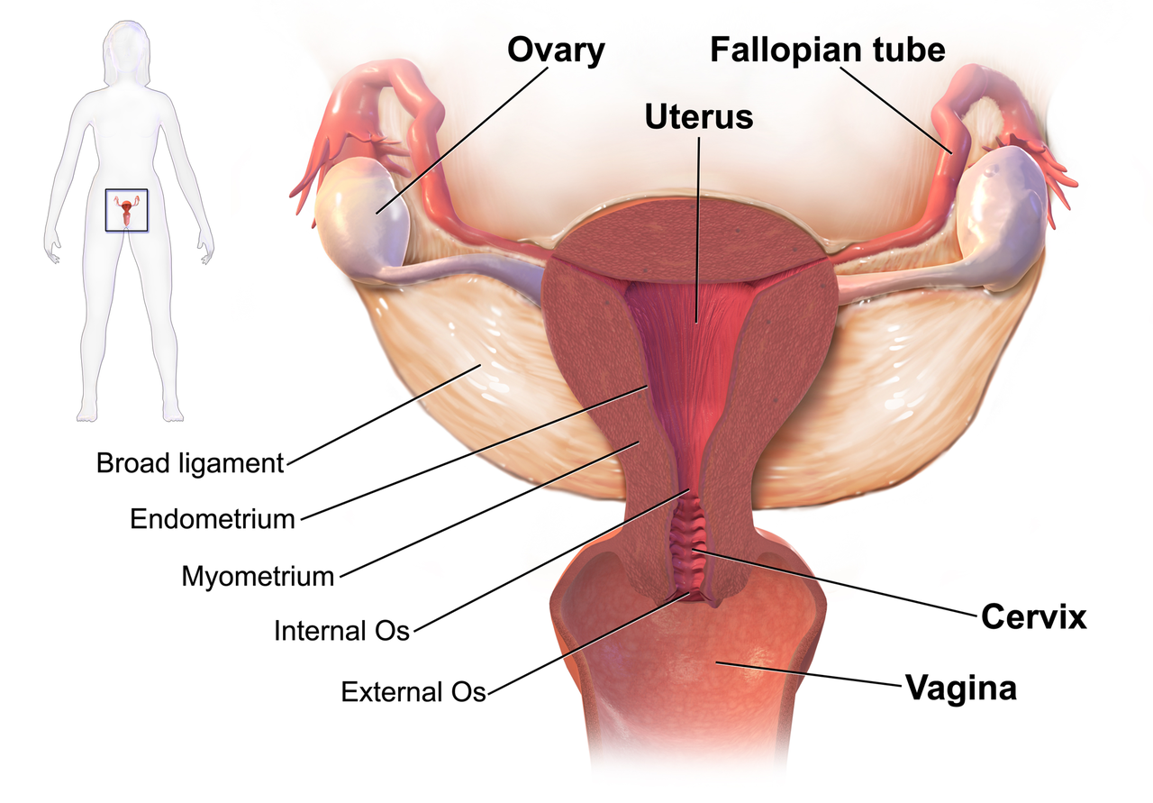September is Gynae Cancer Awareness Month