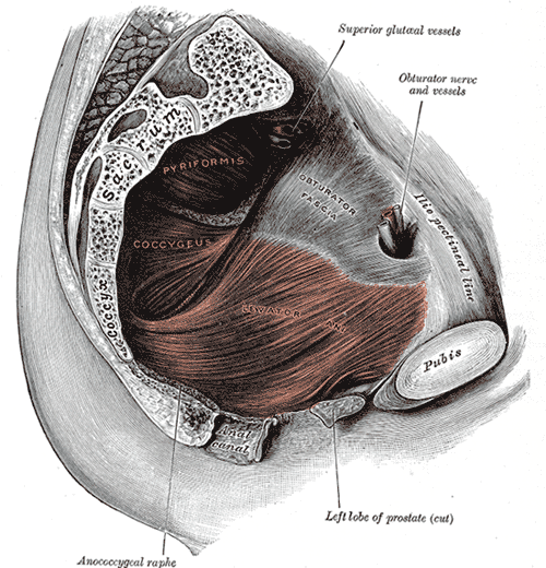 Myofascial Pelvic Pain: Symptoms and Assessment