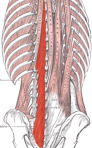 Cortical Changes with Back Pain