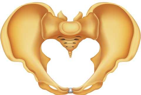 Risk Factors for Postpartum Coccyx Pain